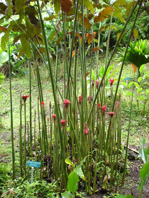 Hilo_garden_looks_plastic_flowers