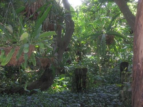 lush shade area of garden